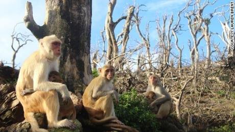 Rhesus monkeys made new friends after Hurricane Maria.