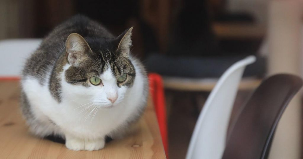 Study shows that cats like to sit in squares