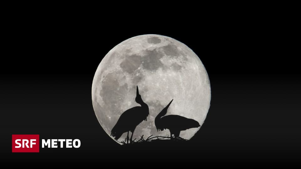 """""""Super Moon"""" - The Moon is rarely this close - meteorology"""