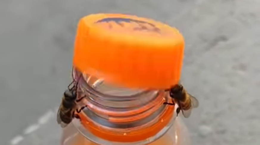 Two bees open a bottle of Fanta - and the Internet goes off