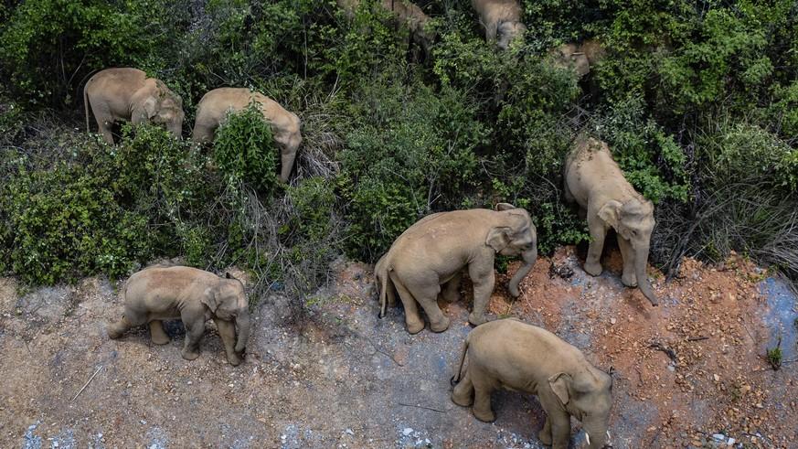 15 elephants migrate to Kunming, China