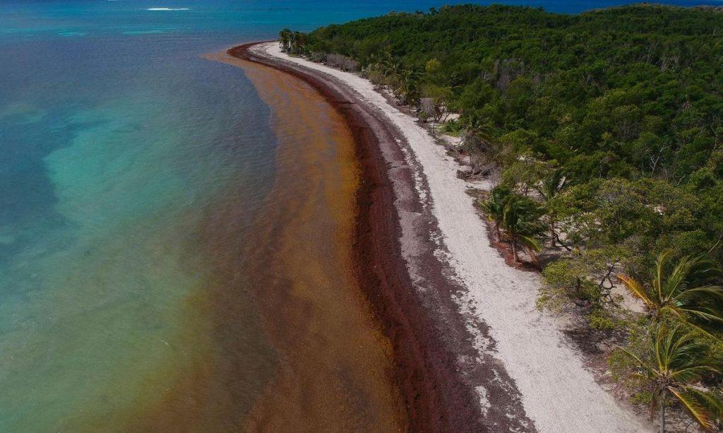 Plague of algae in the Atlantic Ocean - brown tide in the sea