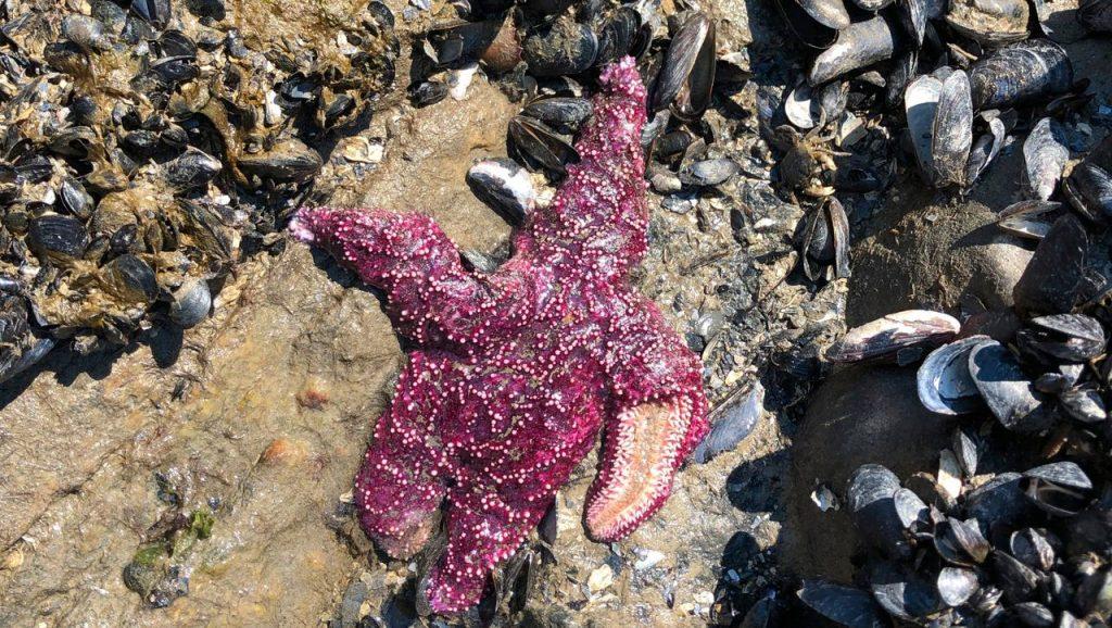USA and Canada: Heat kills marine animals and endangers fish