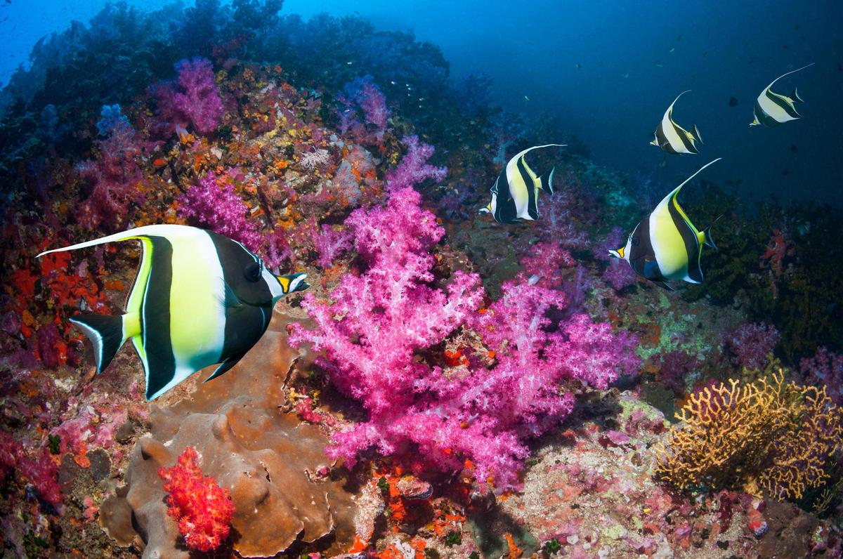 Victims of climate change could include: Coral reefs in the Andaman Sea, Thailand, an area that has been hard hit by global warming and new extreme weather conditions.