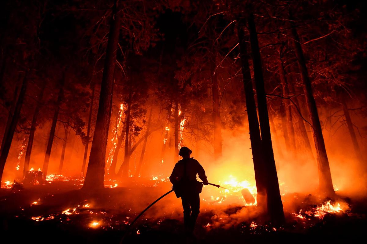 Tough battle: Firefighter Bruce Wills extinguishes a fire in Sequoia National Forest.  (August 25, 2021)